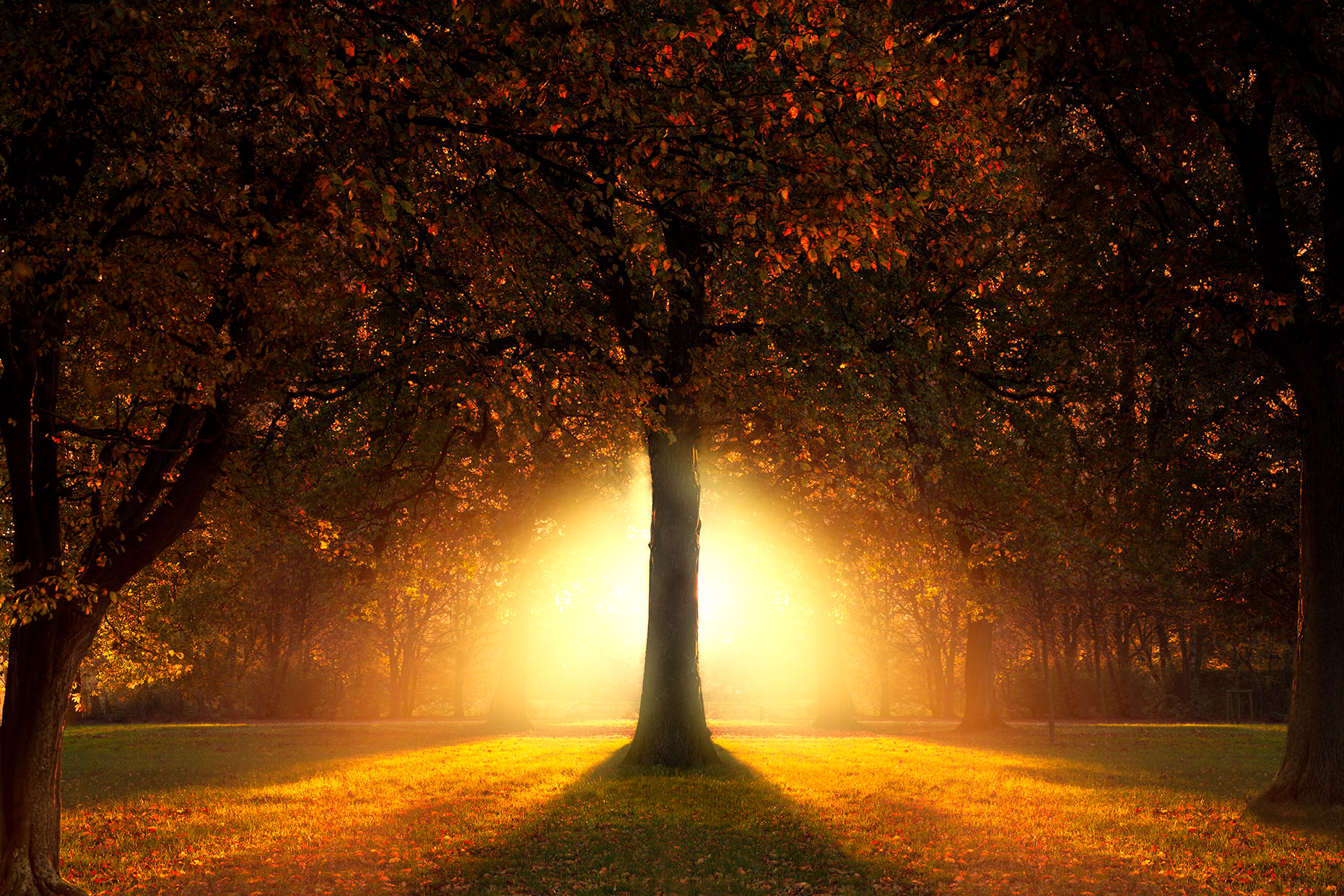 Garden of Eden | Lonely tree photography in sunset